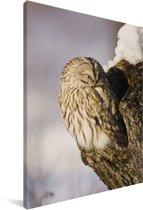 Oeraluil zit in een holte van een boom Canvas 90x140 cm - Foto print op Canvas schilderij (Wanddecoratie woonkamer / slaapkamer)