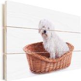 Maltezer hond zit in een mand Vurenhout met planken 90x60 cm - Foto print op Hout (Wanddecoratie)