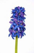 Blauwe hyacint kunstbloem 30 cm