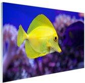 Knalgele vis in koraalrif Glas 90x60 cm - Foto print op Glas (Plexiglas wanddecoratie)