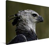 Close-up van de Harpij Canvas 180x120 cm - Foto print op Canvas schilderij (Wanddecoratie woonkamer / slaapkamer) XXL / Groot formaat!