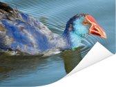 Reflectie van een purperkoet in het water Poster 40x30 cm - klein - Foto print op Poster (wanddecoratie woonkamer / slaapkamer)