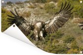 Vale gier met gespreide vleugels Tuinposter 90x60 cm - Tuindoek / Buitencanvas / Schilderijen voor buiten (tuin decoratie)