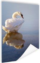 Zwaan  Poster 60x90 cm - Foto print op Poster (wanddecoratie)