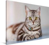Portret van een Amerikaanse Korthaar Canvas 30x20 cm - klein - Foto print op Canvas schilderij (Wanddecoratie woonkamer / slaapkamer) / Huisdieren Canvas Schilderijen