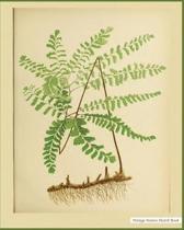 Nature Sketch Book