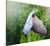 Een slechtvalk vliegt met open vleugels Canvas 90x60 cm - Foto print op Canvas schilderij (Wanddecoratie woonkamer / slaapkamer)