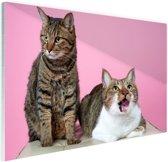 Twee katten voor roze achtergrond Glas 60x40 cm - Foto print op Glas (Plexiglas wanddecoratie)