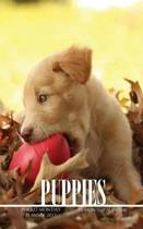 Puppies Pocket Monthly Planner 2017