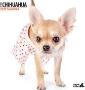 Chihuahua Kalender 2020 Modern