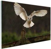 Vliegende kerkuil Glas 90x60 cm - Foto print op Glas (Plexiglas wanddecoratie)