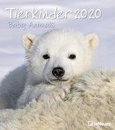 Babydieren - Baby Animals Kalender 2020