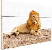 Liggende leeuw Hout 60x40 cm - Foto print op Hout (Wanddecoratie)