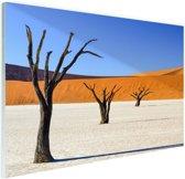 Boompjes in woestijn Glas 30x20 cm - klein - Foto print op Glas (Plexiglas wanddecoratie)