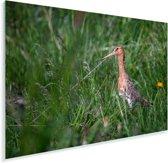 Zijaanzicht van een Grutto in het gras Plexiglas 30x20 cm - klein - Foto print op Glas (Plexiglas wanddecoratie)