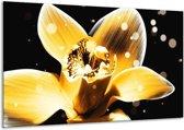 Glasschilderij Bloem   Geel, Zwart   120x70cm 1Luik   Foto print op Glas    F005133