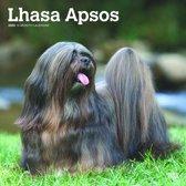 Lhasa Apsos Kalender 2020