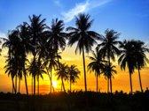 Fotobehang 7 Banen Digitale druk - Palmbomen - Speciaal Fotobehang materiaal - Art. 97389