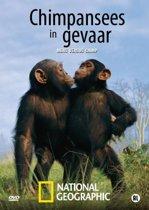Chimpansees In Gevaar