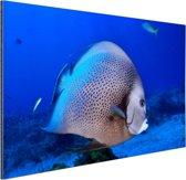 Engelvis Aluminium 180x120 cm - Foto print op Aluminium (metaal wanddecoratie) XXL / Groot formaat!