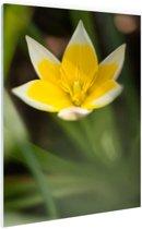 Gele bloem Glas 40x60 cm - Foto print op Glas (Plexiglas wanddecoratie)
