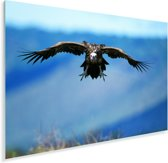 Oorgier met wijd gespreide vleugels Plexiglas 60x40 cm - Foto print op Glas (Plexiglas wanddecoratie)