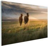 IJslandse paarden in het veld Glas 90x60 cm - Foto print op Glas (Plexiglas wanddecoratie)