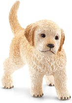 Jonge Golden Retriever