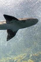 Sharks (Journal / Notebook)