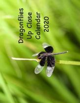 Dragonflies Up Close Calendar 2020