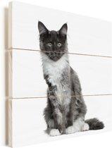 Een poserende Maine Coon kat Vurenhout met planken 50x50 cm - Foto print op Hout (Wanddecoratie)