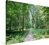 Weg in de bossen van het Nationaal Park Białowieża in Polen Canvas 180x120 cm - Foto print op Canvas schilderij (Wanddecoratie woonkamer / slaapkamer) XXL / Groot formaat!