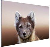 Jonge poolvos Aluminium 30x20 cm - klein - Foto print op Aluminium (metaal wanddecoratie)
