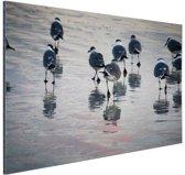 Meeuwen in het water Aluminium 90x60 cm - Foto print op Aluminium (metaal wanddecoratie)
