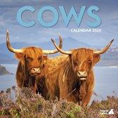 Koeien Kalender 2020