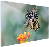 Pages vlinder op bloem Glas 30x20 cm - klein - Foto print op Glas (Plexiglas wanddecoratie)