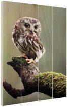 Close-up van kleine uil Hout 20x30 cm - klein - Foto print op Hout (Wanddecoratie)