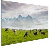 Koeien met bergen Aluminium 90x60 cm - Foto print op Aluminium (metaal wanddecoratie)