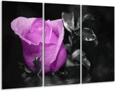 Glasschilderij Roos | Paars, Grijs, Zwart | 120x80cm 3Luik | Foto print op Glas |  F003602