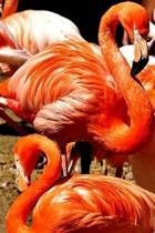 Stunning Flamingo Journal
