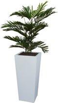 Kunstplant Arecapalm met sierpot Genesis38 wit