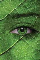 Green Eyes Journal