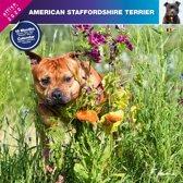Staffordshire Bull Terrier Kalender 2020