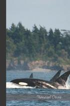 Transient Orcas: small lined Orca Notebook / Travel Journal to write in (6'' x 9'') 120 pages