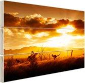 Kangoeroe bij zonsondergang Hout 160x120 cm - Foto print op Hout (Wanddecoratie) XXL / Groot formaat!