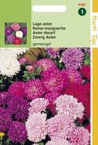 Hortitops Zaden - Callistephus Chinensis Dwergchrysanthemum Gemengd