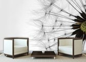 Dandelion Photo Wallcovering