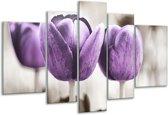 Glasschilderij Tulpen   Paars, Grijs, Wit   170x100cm 5Luik   Foto print op Glas    F002791