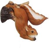 Eekhoorn hangend - wandvoederschaal
