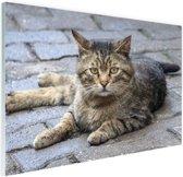 Liggende kat op stoep Glas 120x80 cm - Foto print op Glas (Plexiglas wanddecoratie)